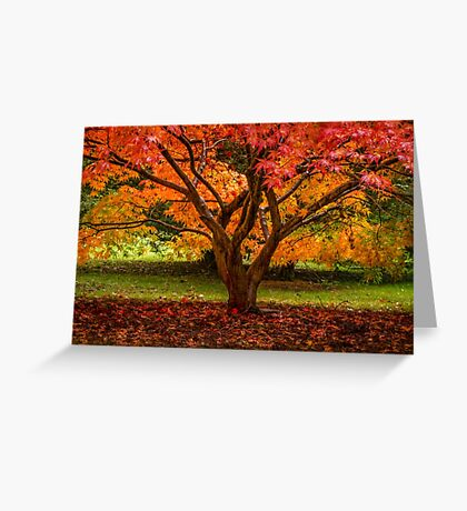 Traffic Light Tree Greeting Card