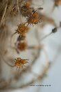 Dry & Curly © Vicki Ferrari by Vicki Ferrari