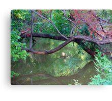 Oklahoma City Creekside Autumn Landscape Canvas Print