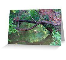Oklahoma City Creekside Autumn Landscape Greeting Card