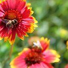 Bees by Paula Bielnicka