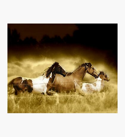 Horses on the Run Photographic Print
