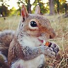 Smiling Happy Squirrel  by antarcticpip