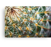 Mexican Round Cactus Canvas Print