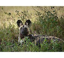 Wild Dog Photographic Print