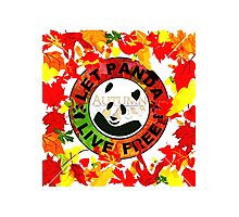 Let panda live free autumn Photographic Print
