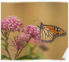 Monarch On Swamp Milkweed Poster