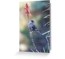Red Wattle Bird 3 Greeting Card