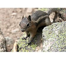 Rocky Mountain Squirrel Photographic Print