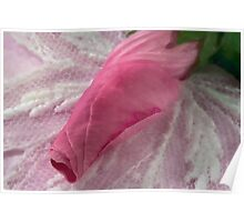 Lavatera Bud Macro - Digital Watercolor Poster