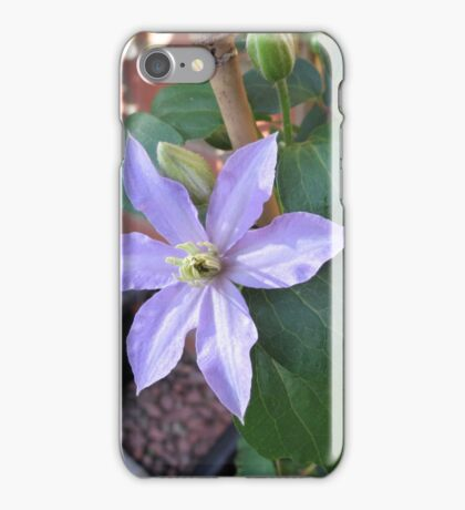 New Blue Clematis Blossom iPhone Case/Skin