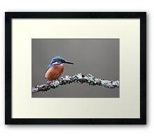 Kingfisher on Riverside Branch Framed Print