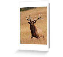 Bull Elk Charging Greeting Card