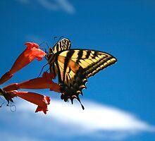 Butterfly Sky by UmaJ