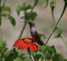 Smiling Hummingbird by UmaJ