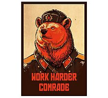 Soviet Bear - Work Harder Comrade Photographic Print