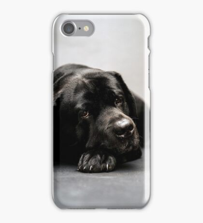 lovely Labrador Retriever  iPhone Case/Skin