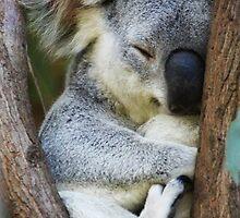 Sleepy! by Danielle Espin