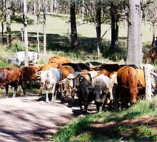 Herding the cattle by Danielle Espin