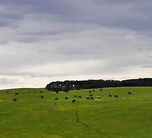 cape bridgewater, victoria, australia by gary roberts