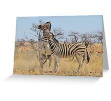 Zebra Fight - African Stallions Greeting Card