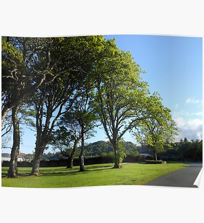 Row of Trees, Lews Castle Grounds, Stornoway Poster