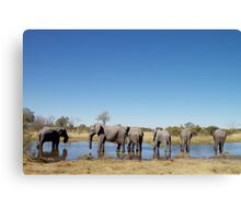 Elephants Wading in a Shallow River in Botswana Canvas Print
