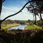 Silhouetted trees along Beautiful Werribee River by EdsMum