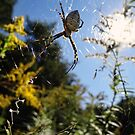 Come into my web said the spider to the fly by vigor