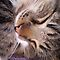 WHISKERS - CAT, DOG OR MAN :o)