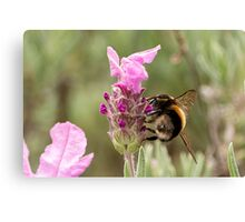 Bumble Bee in the garden Canvas Print