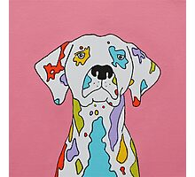 Coloured Dalmatian  Photographic Print