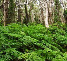 Lost in the trees.  by RowanAllsop97