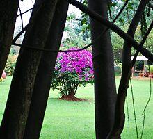 Flowering Tree, Jinja, Uganda by clydemax