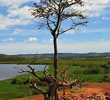 Tree With Storks, Lake Victoria, Uganda by clydemax