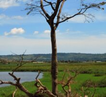 Tree With Storks, Lake Victoria, Uganda Sticker