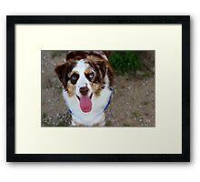 Happy Dog Framed Print