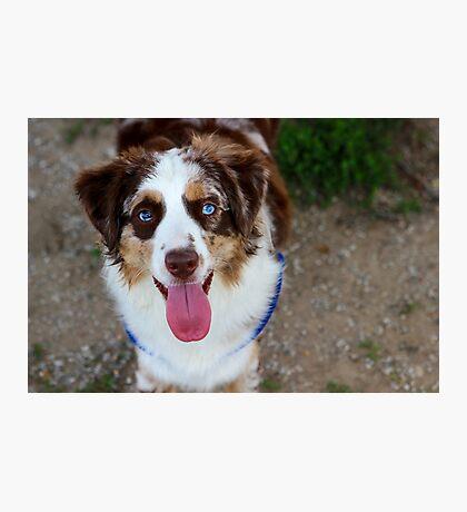 Happy Dog Photographic Print