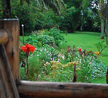 Backyard Flower Garden by clydemax