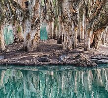 Billabong Reflections by yolanda
