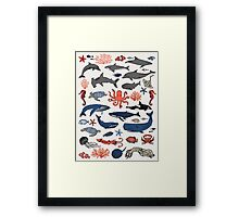 Ocean Animals by Andrea Lauren Framed Print