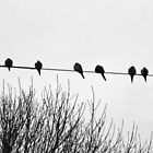 Birds Resting by Bine