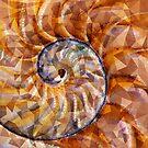 Nautilus by Dana Roper
