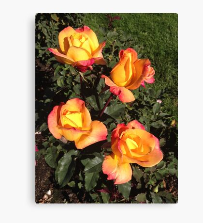 Sunset Roses Canvas Print