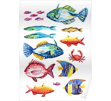 Botanical colorful fish group watercolor Poster