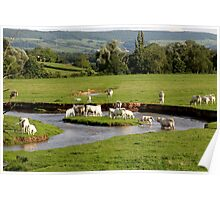 Landscape with cows (France) Poster