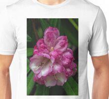 Opening bud on Pink Rhododendron Dalhousie tree CJ Dennis garden Toolangi Victoria 20160903 7438  Unisex T-Shirt
