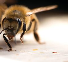 Female worker honeybee by nancyanndesigns