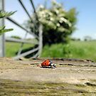 Life in Miniature by Barrie Woodward