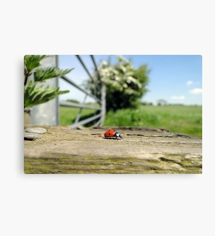 Life in Miniature Canvas Print